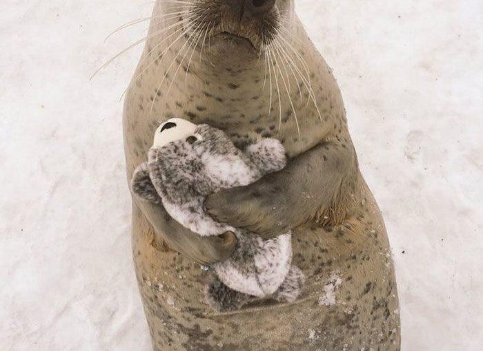 Seal หาเวอร์ชั่นของ Toy เองไม่สามารถหยุดกอดได้