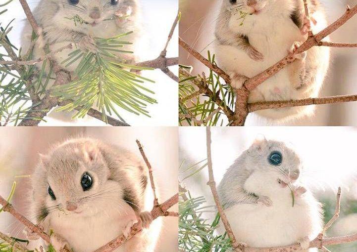 สัตว์น่ารักสุด ๆ เหล่านี้มีอยู่ในพื้นที่ขนาดเล็กที่ยังไม่ถูกทำลายของประเทศญี่ปุ่น
