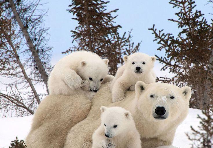 ภาพสัตว์ที่น่ารักของครอบครัว