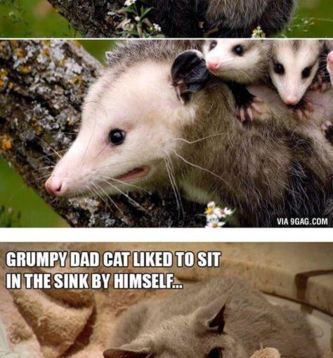 การแสดงออกของสัตว์ที่สมบูรณ์แบบสรุปสิ่งที่ต้องการเป็นผู้ปกครอง